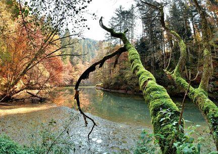 Almenland Wanderwege Steiermark Raabklamm Natur