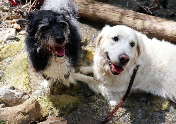 Hund Hunde Hundeurlaub Luxuslodge Annaberg