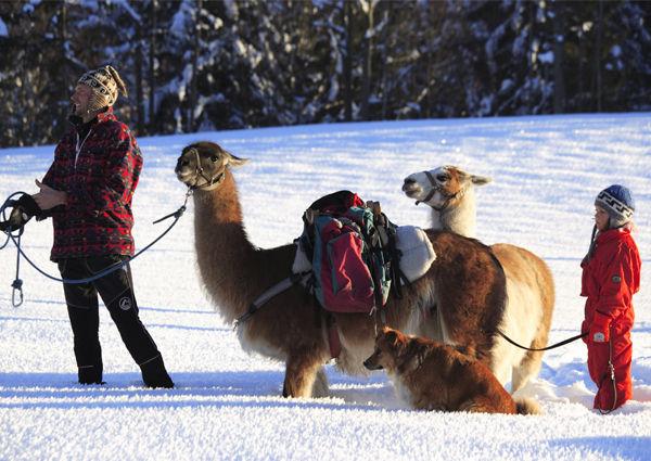 Lama-Trekking Werfenweng Pongau