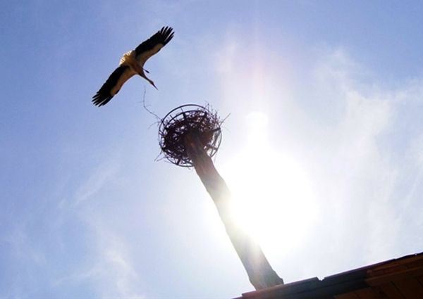 Storkhouse Raiding