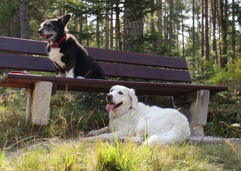 Urlaub mit Hund Bewegte Berge Saalfelden