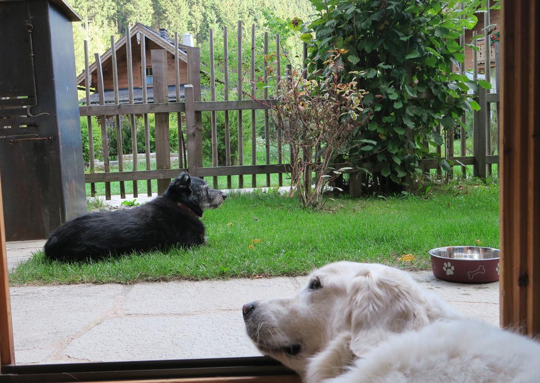 Urlaub mit Hund Feriendorf Holzleb'n Großarl Hunde