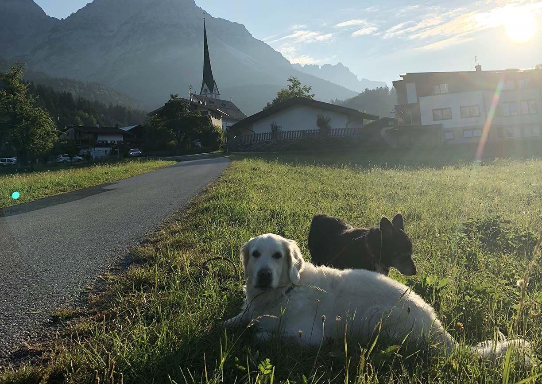Urlaub mit Hund Kaiserlodge Scheffau Tirol