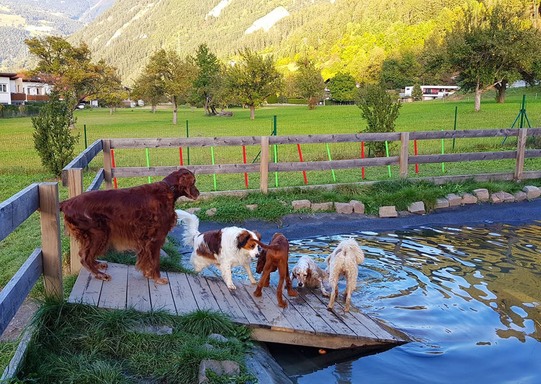 Urlaub mit Hund Riederhof Ried im Oberinntal