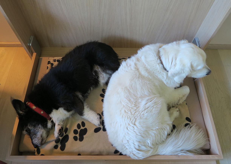 Urlaub mit Hund Wasnerin Bad Aussee Hunde
