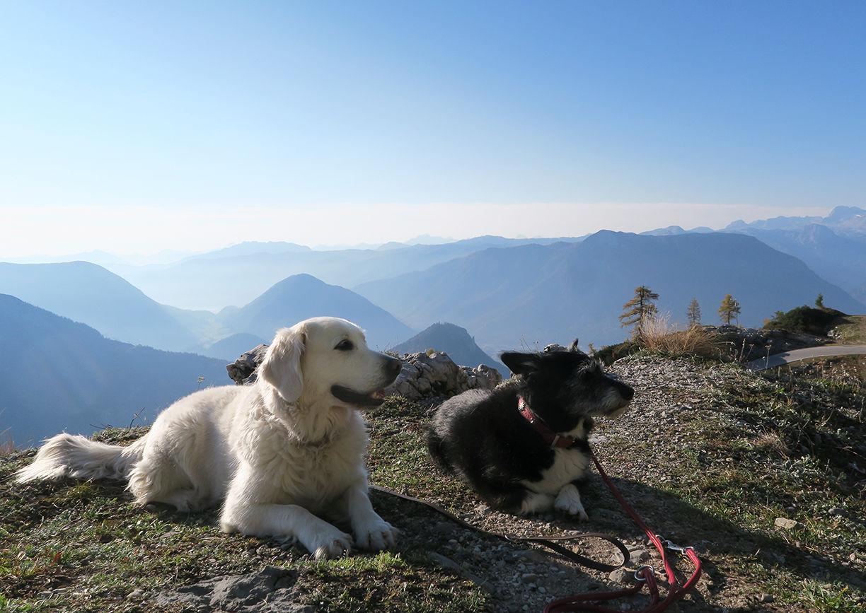 Urlaub mit Hund Wasnerin Bad Aussee Loser