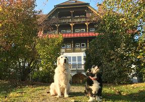 Urlaub mit Hund Wasnerin Bad Aussie Hundehotel
